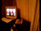 Ярика кошка смотрит сериал
