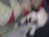 видео это мой кот